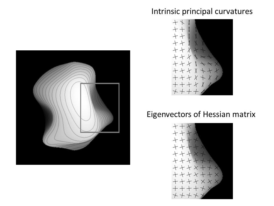 Eigenvectors of Hessian matrix Intrinsic principal curvatures