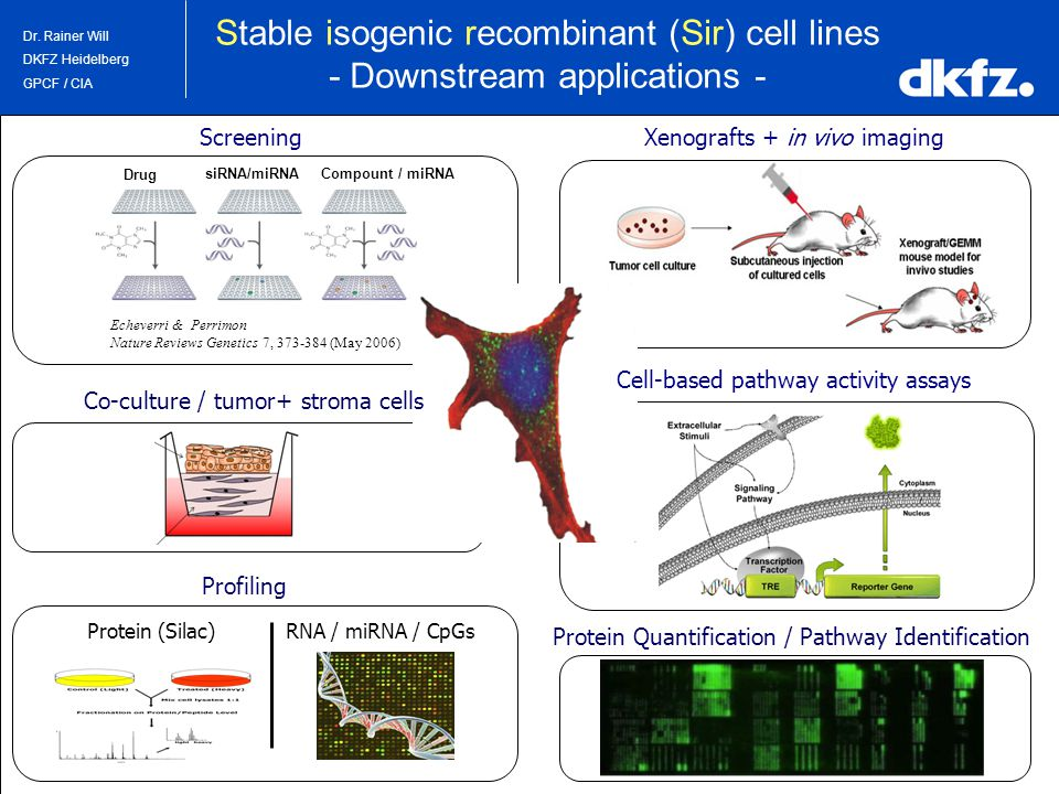 3/30/2015 | Dr. Rainer Will DKFZ Heidelberg GPCF / CIA Stable isogenic recombinant (Sir) cell lines - Downstream applications - Xenografts + in vivo i