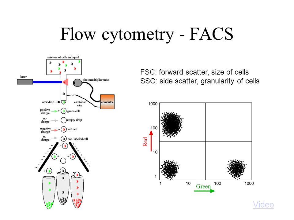 NKp46 CD107a FSC SSC PB-NKPB-NK + K562 CD107a-Activity-Assay Determination of the killing capacity of NK cells Establishment of: Europium-Killing-Assay