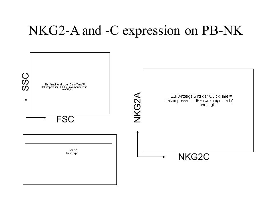 NK cell activity in healthy persons Donor B: 11 % NKp46 staining in Lymphocyte-Population Donor A: 5 % NKp46 staining in Lymphocyte-Population FSC SSC APC PBMCs isolated from whole blood via Ficoll gradient centrifugation