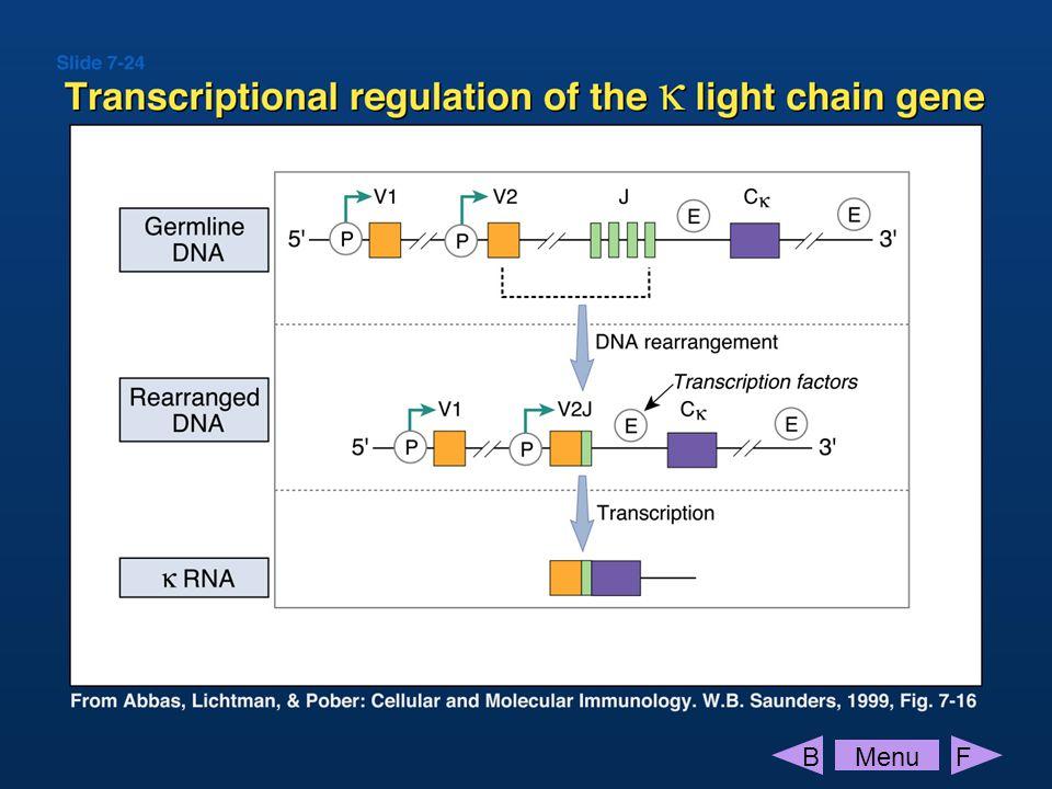 IL-1, TNF , LPS, AGE, oxLDL, Stimulation interleukins, adhesion molecules, pro-coagulant, iNOS, COX, anti-apoptotic Response .