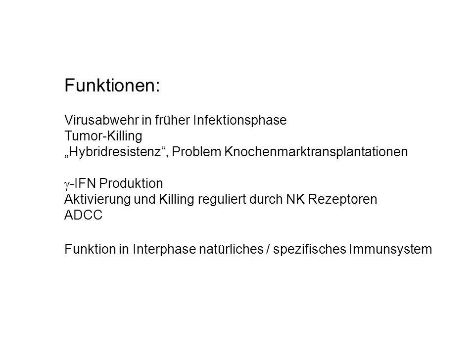 HSZ Lymphoide VZ T + NK VZB VZ B Lymphozyt T Lymphozyt (Thymus) NK Zelle