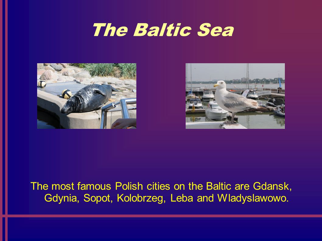 The Baltic Sea Animals living on the Baltic Sea are: seagulls, seals, cormorants, codes, herrings.