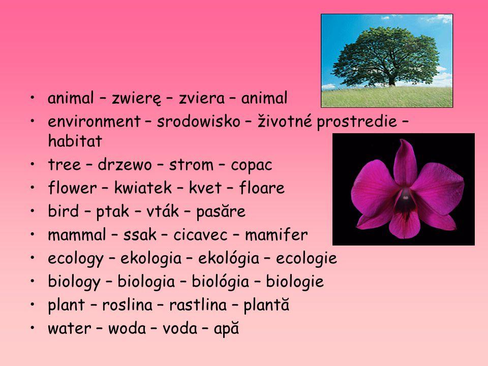 animal – zwierę – zviera – animal environment – srodowisko – životné prostredie – habitat tree – drzewo – strom – copac flower – kwiatek – kvet – floa