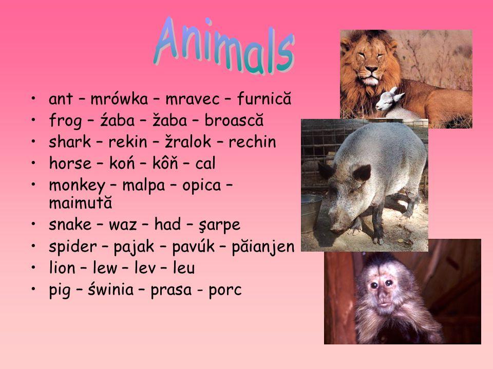 ant – mrówka – mravec – furnică frog – źaba – žaba – broască shark – rekin – žralok – rechin horse – koń – kôň – cal monkey – malpa – opica – maimută