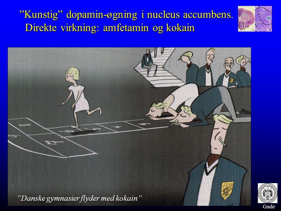 "Gade ""Kunstig"" dopamin-øgning i nucleus accumbens. Direkte virkning: amfetamin og kokain Direkte virkning: amfetamin og kokain ""Danske gymnasier flyde"
