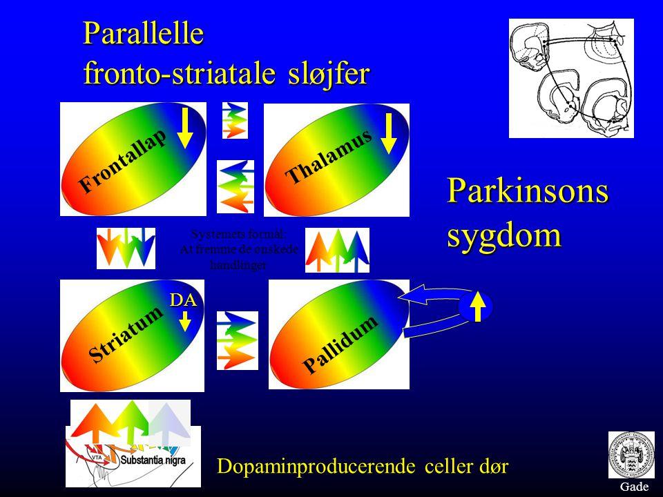 Gade Frontallap Thalamus Striatum Pallidum Parallelle fronto-striatale sløjfer Parkinsons sygdom Dopaminproducerende celler dør DA Systemets formål: At fremme de ønskede handlinger