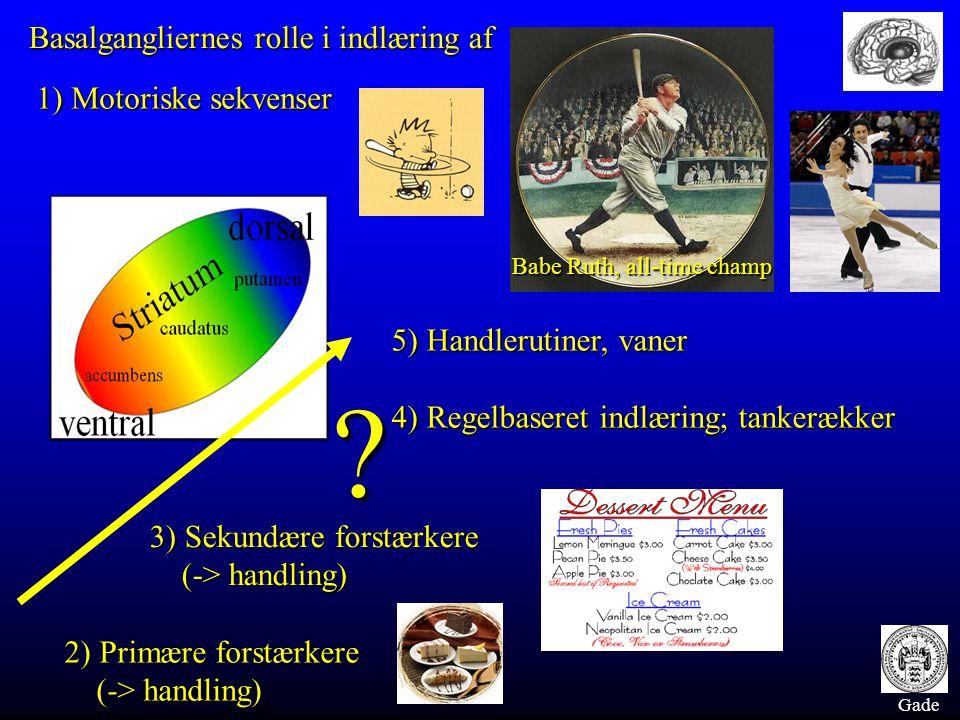 Gade Basalgangliernes rolle i indlæring af 1) Motoriske sekvenser 2) Primære forstærkere (-> handling) 3) Sekundære forstærkere (-> handling) 5) Handlerutiner, vaner 4) Regelbaseret indlæring; tankerækker .