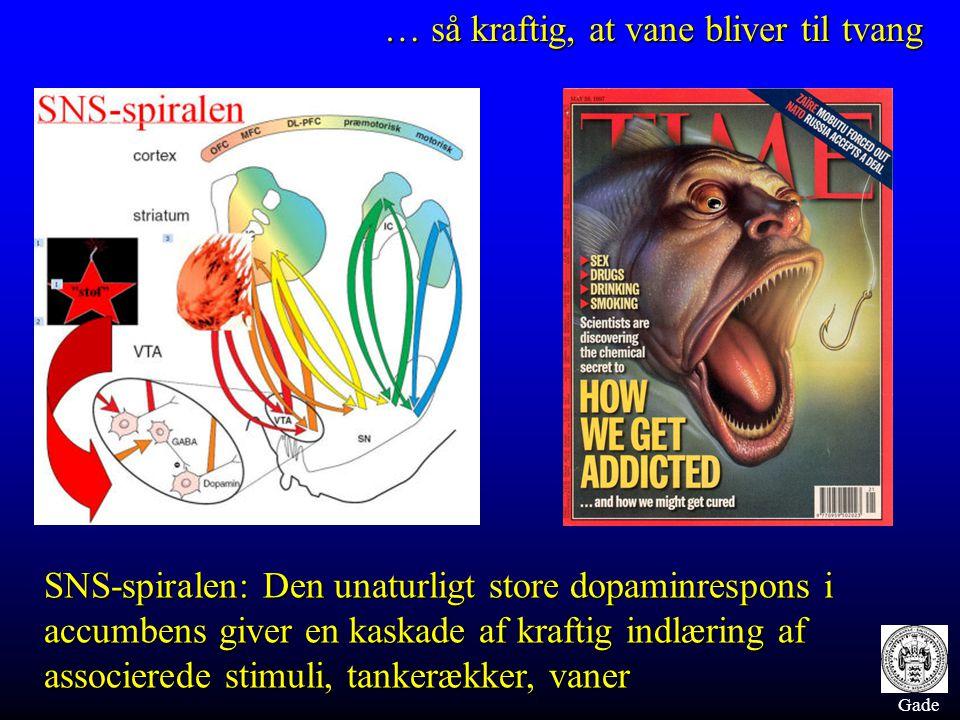 Gade SNS-spiralen: Den unaturligt store dopaminrespons i accumbens giver en kaskade af kraftig indlæring af associerede stimuli, tankerækker, vaner … så kraftig, at vane bliver til tvang