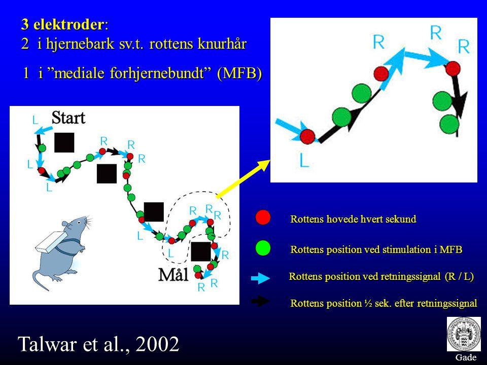 Gade Talwar et al., 2002 Rottens hovede hvert sekund Rottens position ved stimulation i MFB Rottens position ved retningssignal (R / L) Rottens position ved retningssignal (R / L) Rottens position ½ sek.