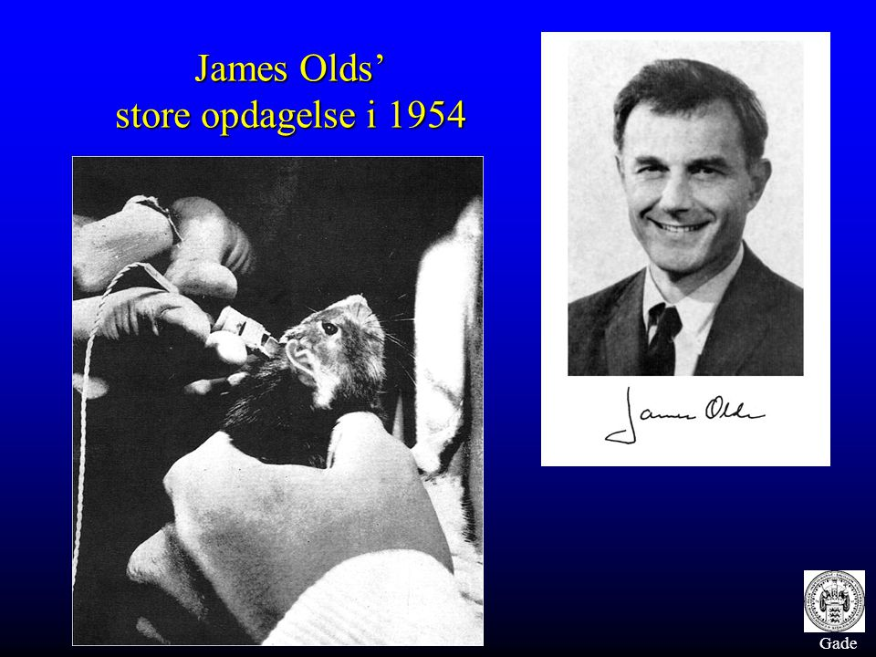 James Olds' store opdagelse i 1954