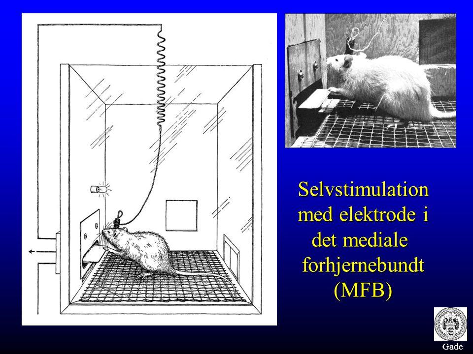 Gade Selvstimulation med elektrode i det mediale forhjernebundt (MFB)