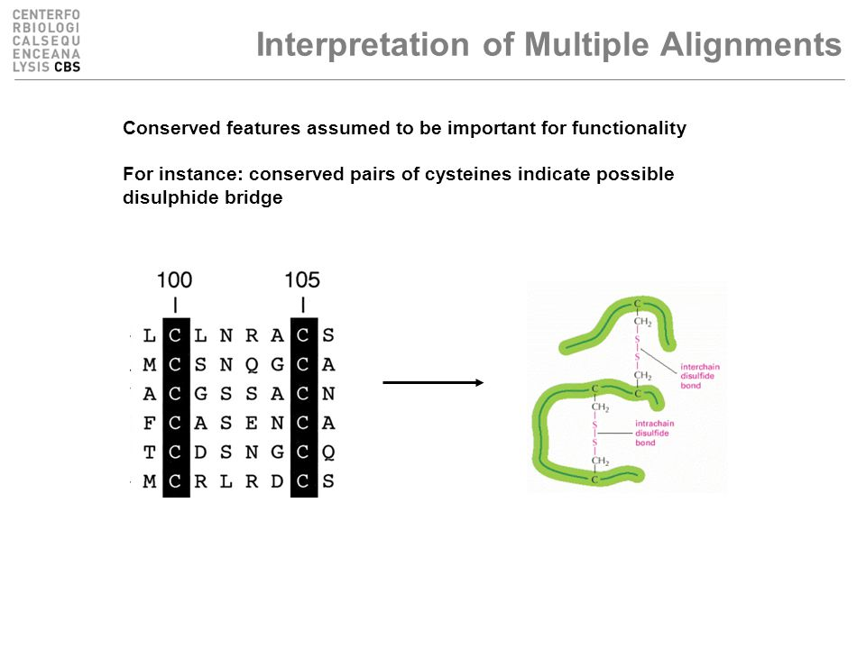 Interpretation of Multiple Alignments Conserved features assumed to be important for functionality For instance: conserved pairs of cysteines indicate possible disulphide bridge