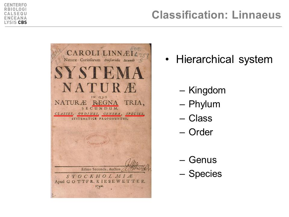 Classification: Linnaeus Hierarchical system –Kingdom –Phylum –Class –Order –Family –Genus –Species