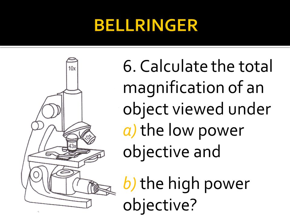 6. Calculate the total magnification of an object viewed under a) the low power objective and b) the high power objective?
