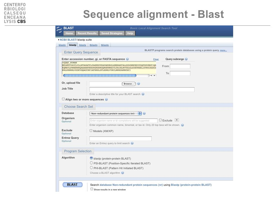 Sequence alignment - Blast