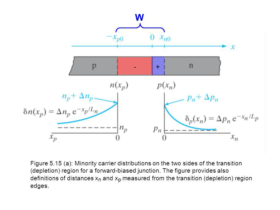 +- W Figure 5.15 (a): Minority carrier distributions on the two sides of the transition (depletion) region for a forward-biased junction.