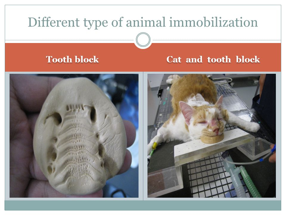 Tooth block Cat and tooth block Different type of animal immobilization