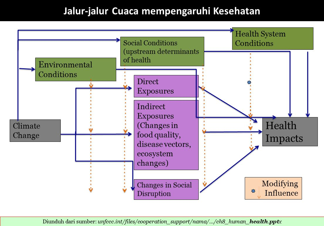 Env ironmental Conditions Social Conditions (upstream determinants of health Health System Condition s Climate Change Direct Exposures Indirect Exposures (Changes in food quality, disease vectors, ecosystem changes) Changes in Social Disruption Health Impacts Modifying Influence Jalur-jalur Cuaca mempengaruhi Kesehatan Diunduh dari sumber: unfccc.int/files/cooperation_support/nama/.../ch8_human_health.pptx ‎
