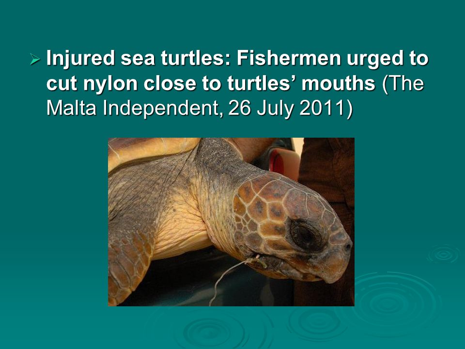  Injured sea turtles: Fishermen urged to cut nylon close to turtles' mouths (The Malta Independent, 26 July 2011)