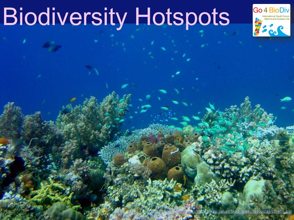 Diversity rich areas in the world Tropical rain forests Coral reefs Large tropical lakes…fishes…isolated productive habitat Deep sea…..age and stability Tropical shrublands Tropical grasslands Deserts Temperate shrublands