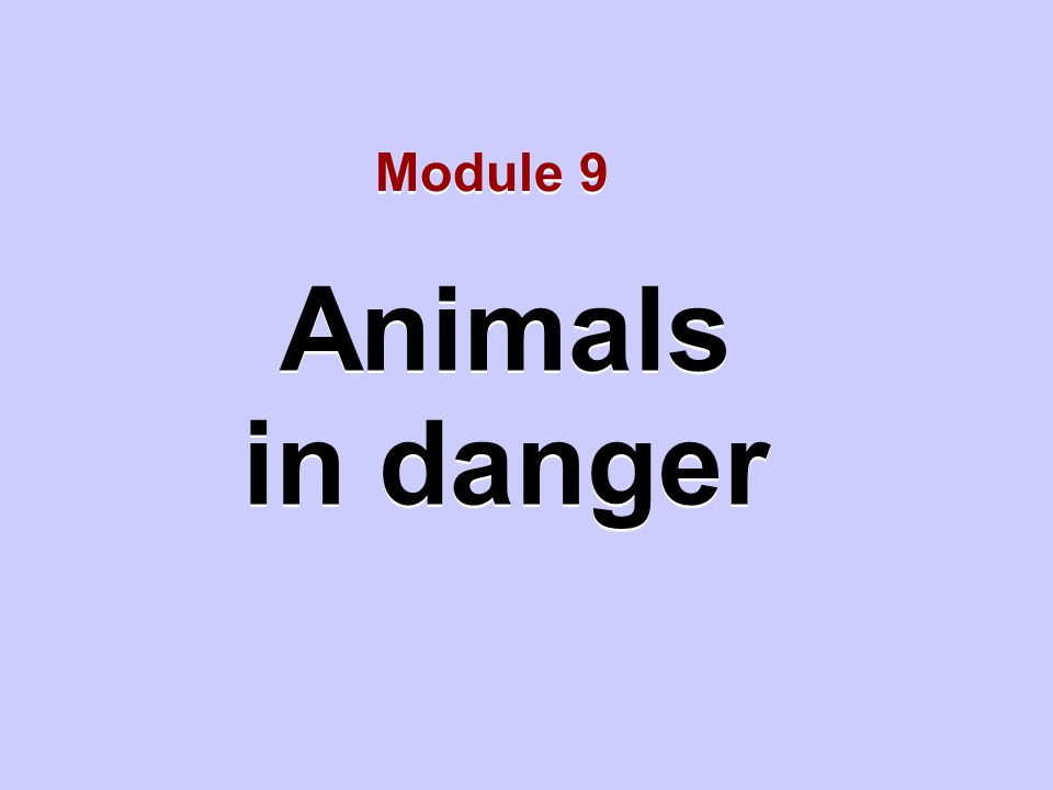 Animals in danger Animals in danger Module 9