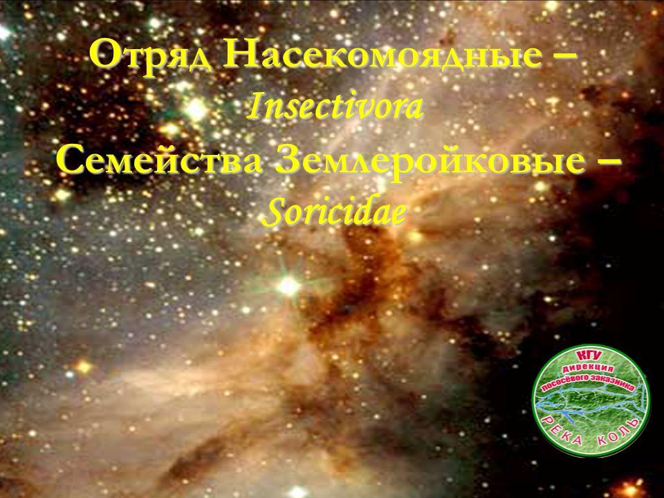Отряд Насекомоядные – Insectivora Семейства Землеройковые – Soricidae