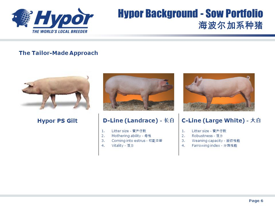Page 6 Hypor Background - Sow Portfolio 海波尔加系种猪 Hypor PS Gilt D-Line (Landrace) -长白 C-Line (Large White) -大白 1.Litter size -窝产仔数 2.Mothering ability -