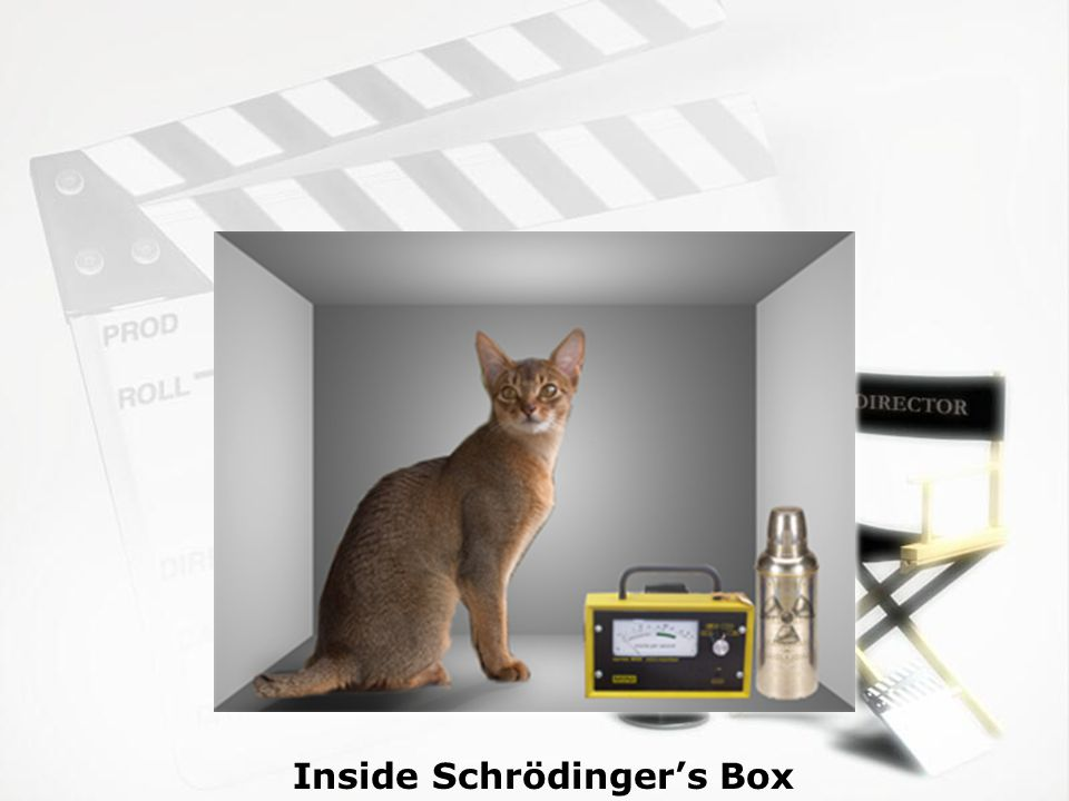 Inside Schrödinger's Box