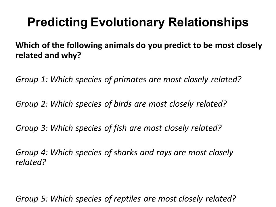Predicting Evolutionary Relationships Which of the following animals do you predict to be most closely related and why? Group 1: Which species of prim