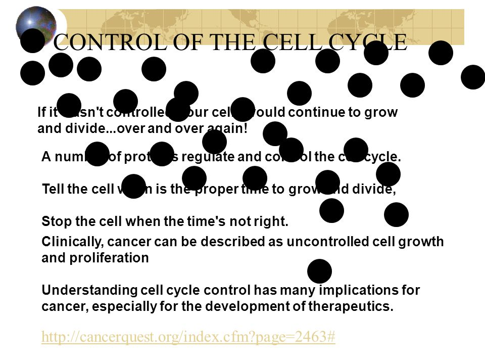 CONTROL OF THE CELL CYCLE If it wasn t controlled, your cells would continue to grow and divide...over and over again.