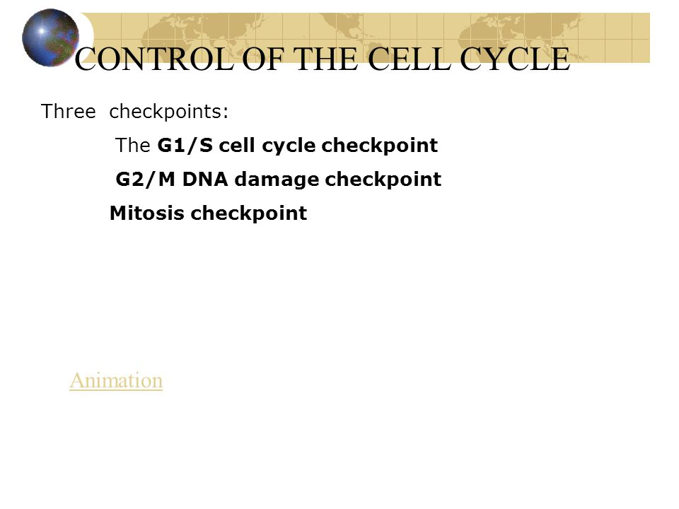 CONTROL OF THE CELL CYCLE Three checkpoints: The G1/S cell cycle checkpoint G2/M DNA damage checkpoint Mitosis checkpoint Animation