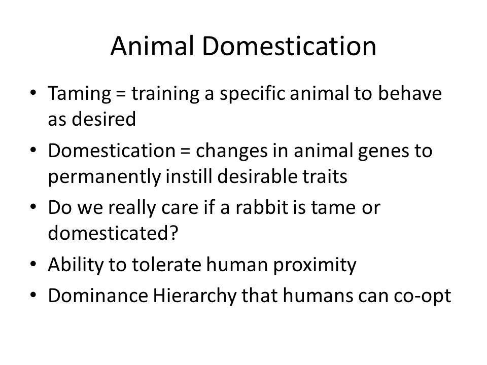 Animal Domestication Taming = training a specific animal to behave as desired Domestication = changes in animal genes to permanently instill desirable