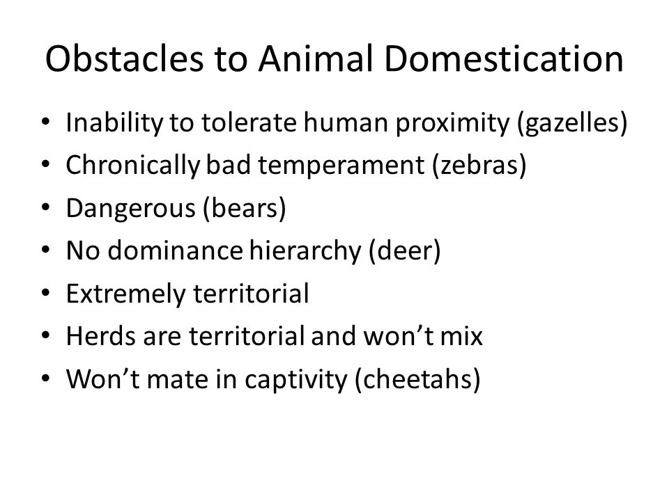Animal Domestication Self-Domestication – Humans create a modified environment around habitations – Humans gather food and vital nutrients like salt – Unconscious selection for low fear factor – Hormonal changes: more frequent mating, mottled coats, juvenile features, floppy ears Have we ever deliberately domesticated any animal?