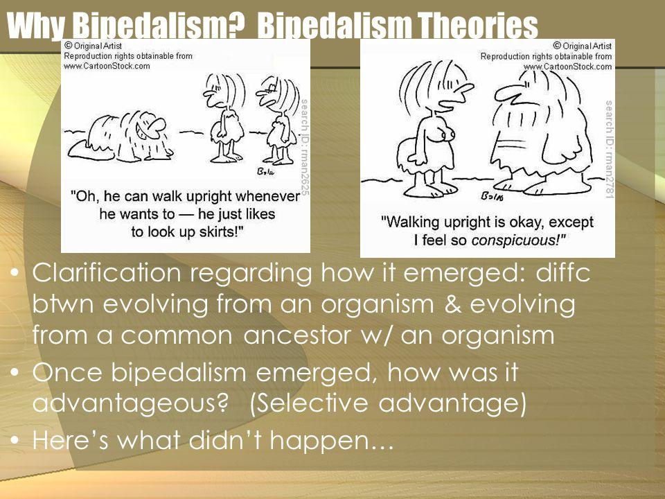 Why Bipedalism.