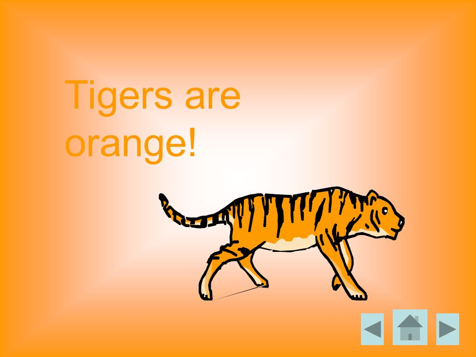 Tigers are orange!