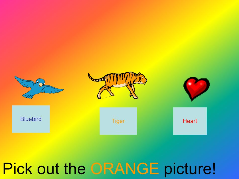 Pick out the ORANGE picture! Tiger Bluebird Heart