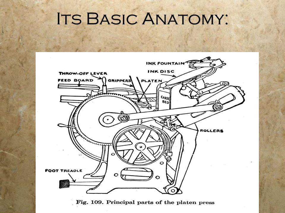 Its Basic Anatomy: