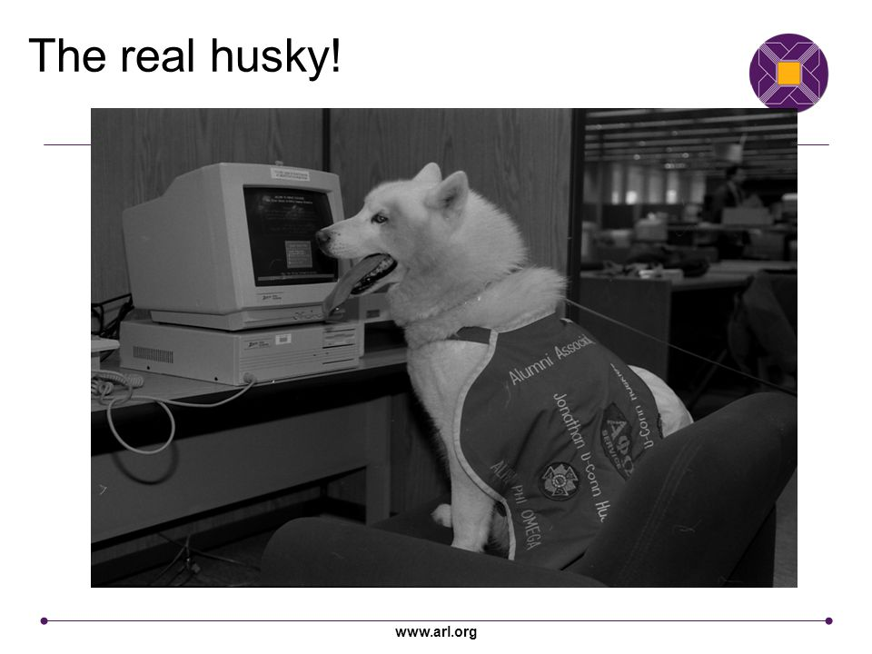 www.arl.org The real husky!