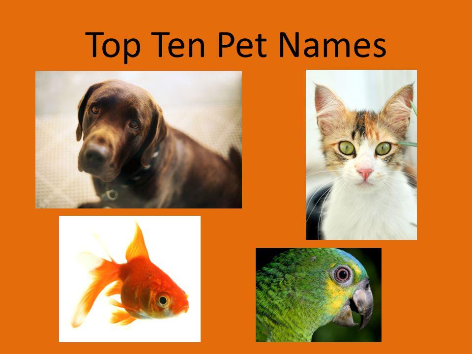 Top Ten Pet Names
