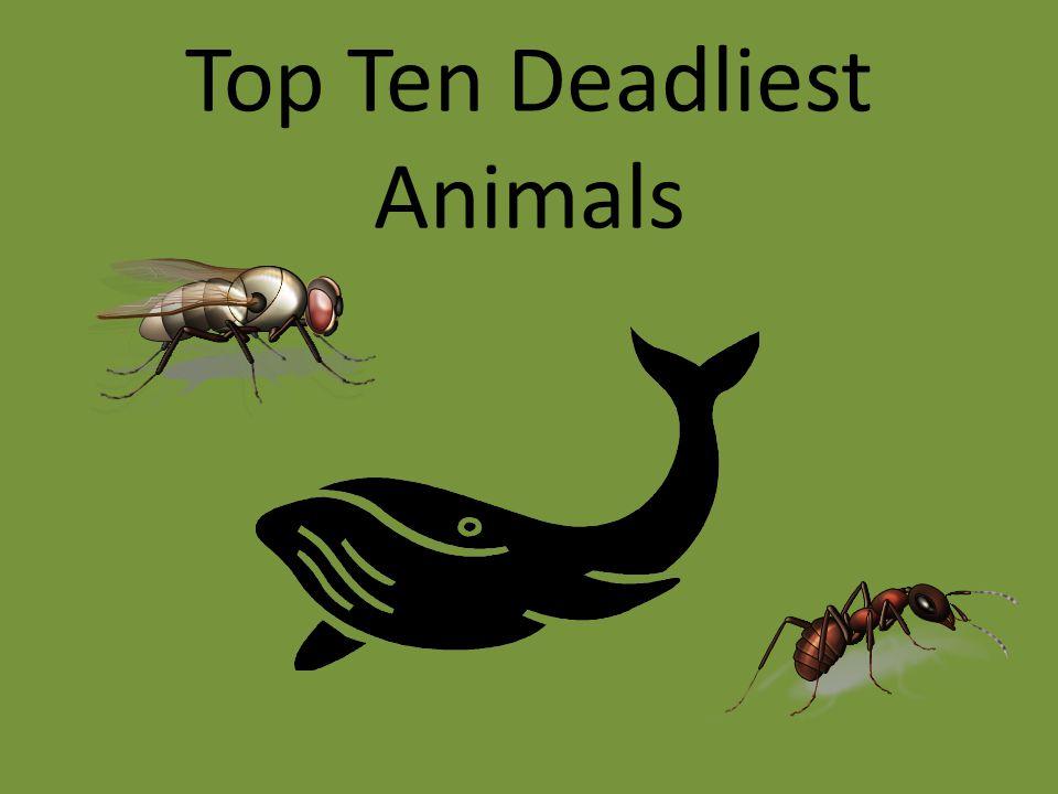 Top Ten Deadliest Animals