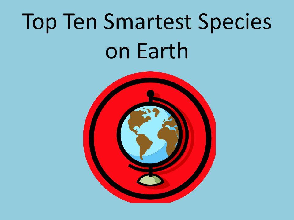Top Ten Smartest Species on Earth