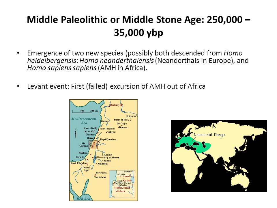 Middle Paleolithic or Middle Stone Age: 250,000 – 35,000 ybp Emergence of two new species (possibly both descended from Homo heidelbergensis: Homo neanderthalensis (Neanderthals in Europe), and Homo sapiens sapiens (AMH in Africa).