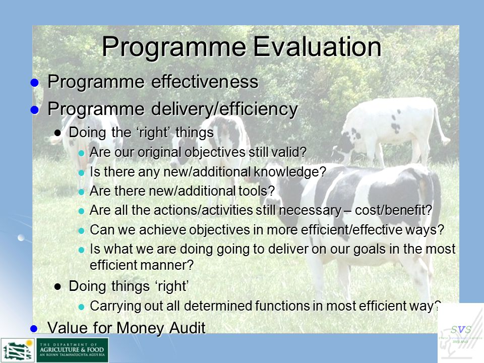 Programme Evaluation Programme effectiveness Programme effectiveness Programme delivery/efficiency Programme delivery/efficiency Doing the 'right' things Doing the 'right' things Are our original objectives still valid.