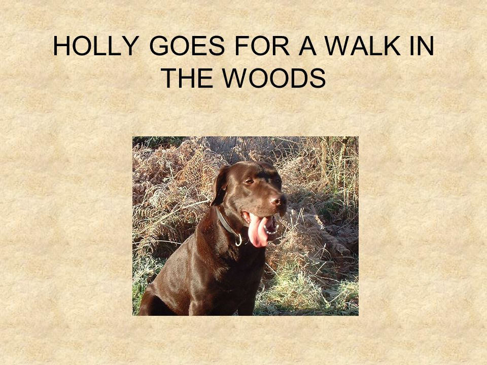 HOLLY GOES FOR A WALK IN THE WOODS