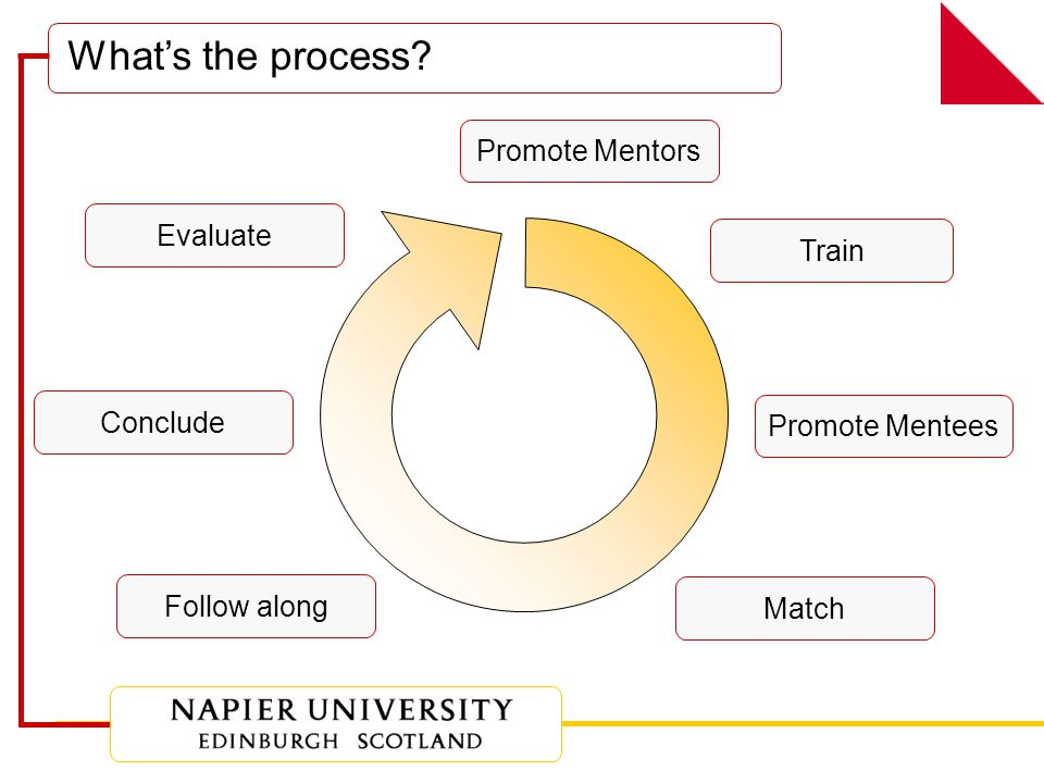 What's the process Promote Mentors Train Promote Mentees Match Follow along Conclude Evaluate