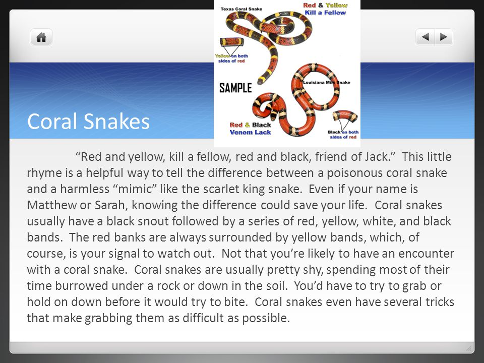 Coral Snakes Red and yellow, kill a fellow, red and black, friend of Jack. This little rhyme is a helpful way to tell the difference between a poisonous coral snake and a harmless mimic like the scarlet king snake.