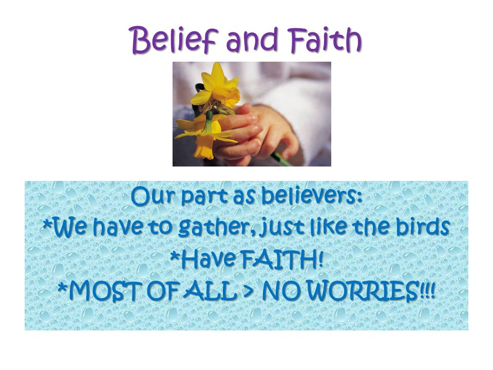 Belief and Faith Our part as believers: *We have to gather, just like the birds *Have FAITH.