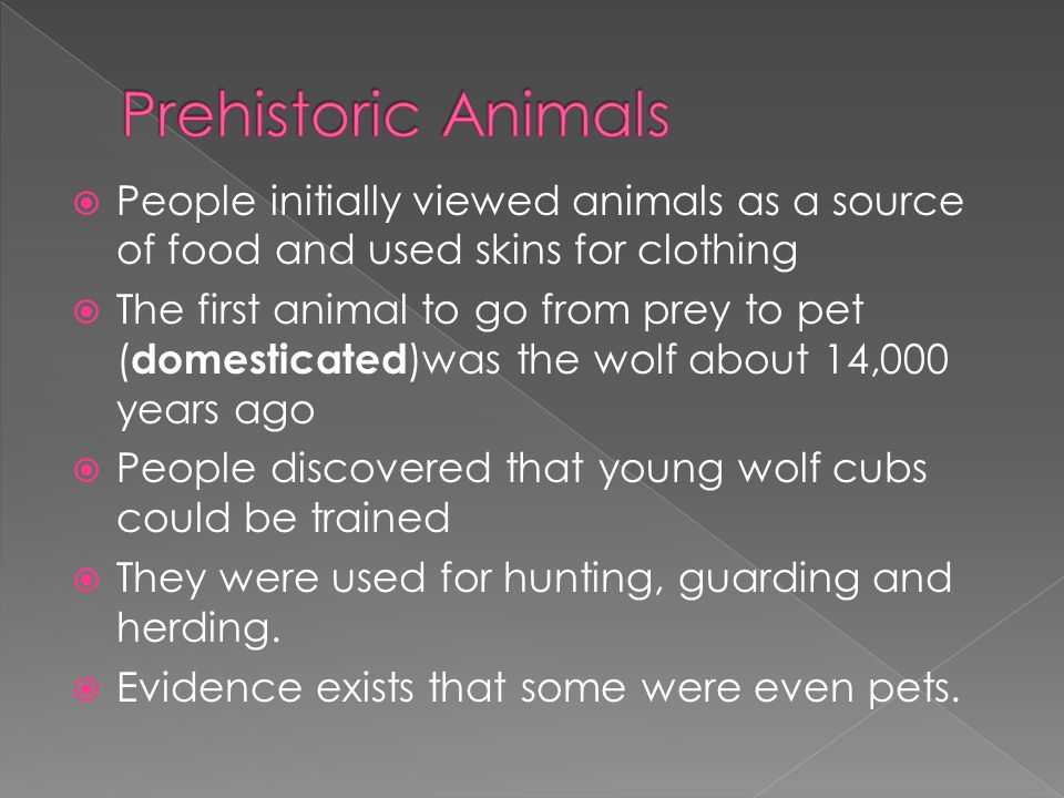  People initially viewed animals as a source of food and used skins for clothing  The first animal to go from prey to pet ( domesticated )was the wo