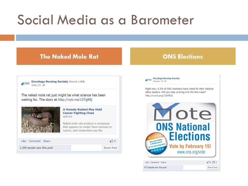 Social Media as a Barometer The Naked Mole RatONS Elections